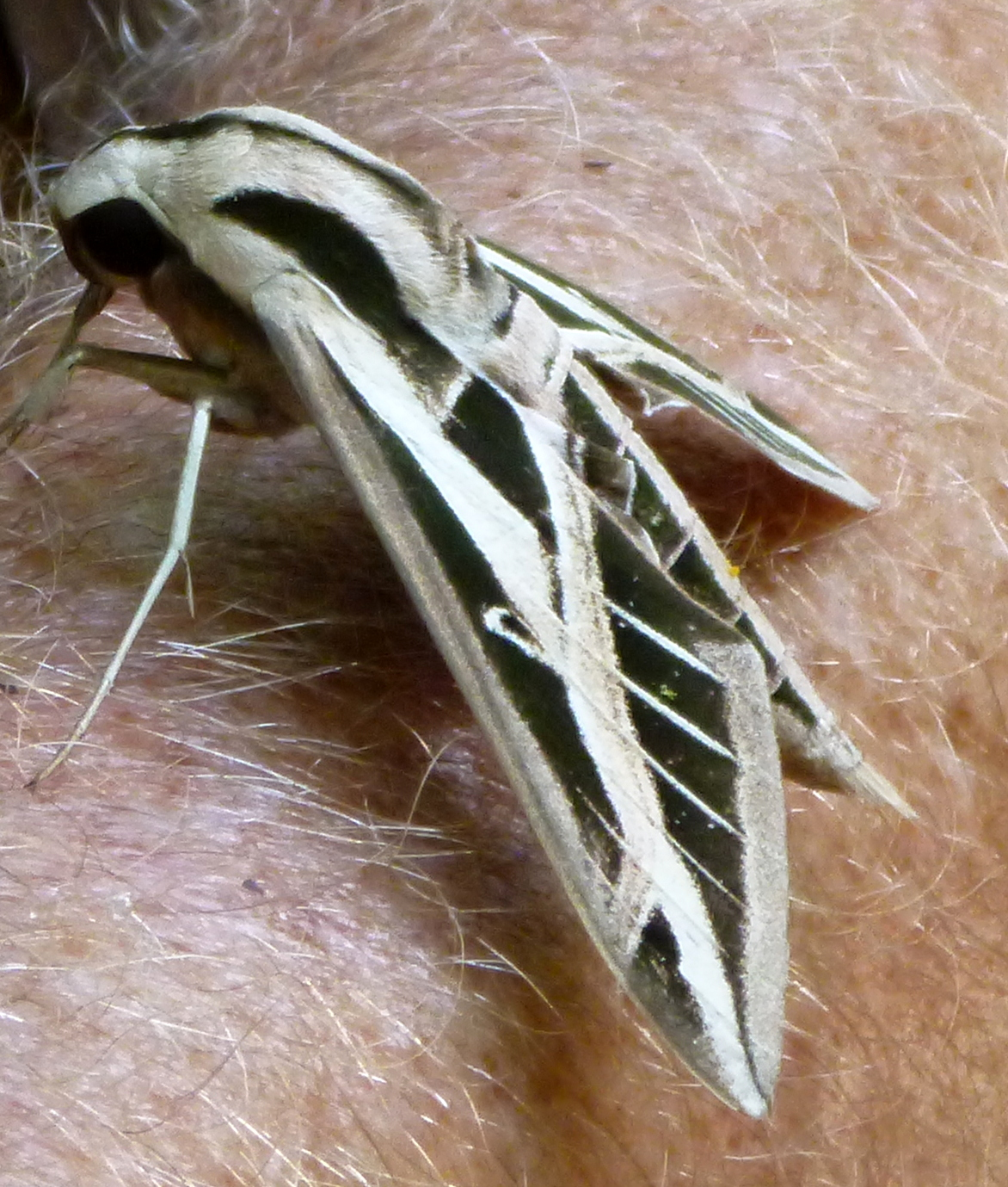 Florida Wetland Insects Womack Creek A Paddler S Guide